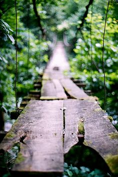 We all have our bridge to Terabithia