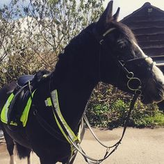 Gem ready for her hack in #HarryHall #HiViz #SeriousAboutSafety