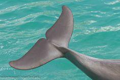 IMG_0414 dolphin tail.jpg