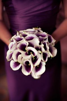 Calla Lillies are among my favorite flowers and this purple is the gorgeous deep rich color to make the pale gray, pastel peach and winter whites pop. My 3 bridesmaids would look great carrying these flowers!
