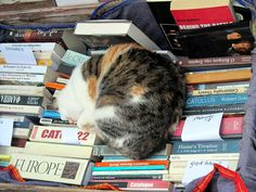 Cats and Books - we think that's a perfect place to nap :)