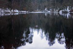 Donoper Teich mit Ente