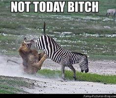 Funny Pictures Of Zebras