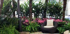 Crie seu espaço verde com samambaias; saiba como cultivá-las - Casa e Decoração - UOL Mulher