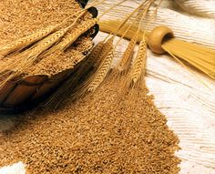 Get details of Wheat the main Rabi crop affected by unseasonal rains across North and Central parts of India in current year. Also get details of the wheat harvest in Punjab, Haryana and Uttar Pradesh, Madhya Pradesh and Maharashtra.