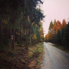 Cestou necestou - pohoří Brdy #walk #trip #trail #outdoor #nature #travel #travelling #traveling #cestovani #dnescestujem #brdy #czechrepublic #ceskarepublika #les #wood #sbatuzkem #podzim #autumn #fall