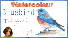 Bluebird Watercolor Tutorial // How to paint a bird in watercolour Watercolor Bird, Watercolor Landscape, Watercolor Paintings, Watercolors, Bird Paintings, Watercolor Artists, Watercolor Pencils, Watercolor Portraits, Painting Videos