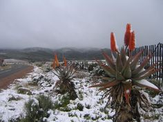 Winter in Oudtshoorn, South Africa! South Afrika, African Life, Out Of Africa, Desert Plants, Winter Wonder, Winter Landscape, Africa Travel, Places To See, Landscape Photography