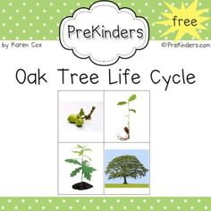 Here are sequencing pictures of a tree's life cycle.  It also has sentences to read and match.