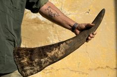 Special investigation: Inside the deadly rhino horn trade » Focusing on Wildlife