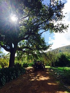 Fairview mornings... #Siesta #Farming #FairviewPaarl #FairviewFamily #Mornings
