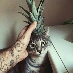 cat, pineapple, and tattoo image