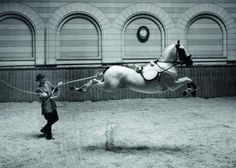 At the Spanish Riding School - A lipizzaner doing a capriole in hand.