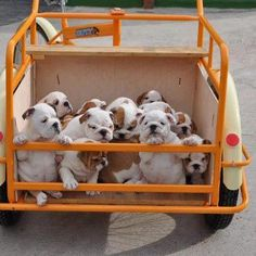 Buggy FULL of Bully babies!
