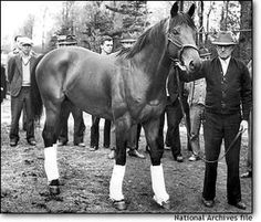 Seabiscuit - descendant of Man O' War - confirmation was less than perfect - used as a training horse to help Granville learn to win races - but he overcame the odds because Seabiscuit had the heart of a champion