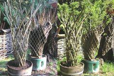 living willow sculptures | Living willow sculptures