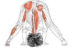 Prasarita padottanasana o flexión hacia delante con las piernas separadas