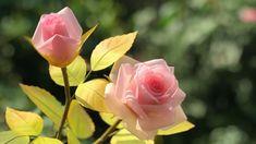 How To Make Paper Rose/ Cách Làm Hoa Hồng Bằng Giấy Can/ HOA VÔ ƯU Flower Making, Paper Flowers, Rose, Youtube, Plants, Pink, Plant, Roses, Youtubers