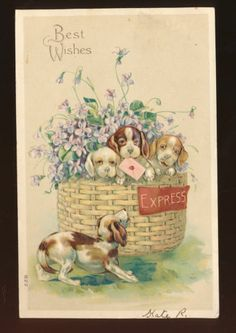 Cute Puppies Dogs in Basket of Flowers Antique Embossed Greeting Postcard-hhh981