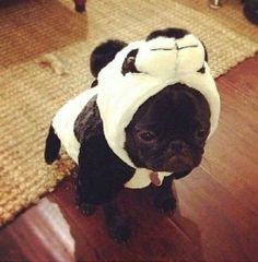 French Bulldog In A Panda Costume