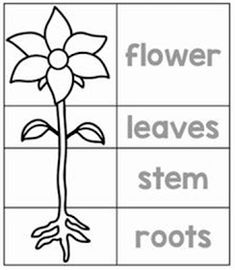 Song: The needs of a plant :-) Plants have basic needs, including food, air, wat. Song: The needs Preschool Writing, Preschool Worksheets, Preschool Activities, Cutting Activities, Parts Of A Flower, Parts Of A Plant, Plant Science, Science And Nature, Plant Song