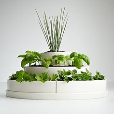 Three tier herb planter  http://gifts.redenvelope.com/gifts/three-tier-herb-planter--seeds-30058308?ref=HomeNoRef&viewpos=14&trackingpgroup=rhmbs