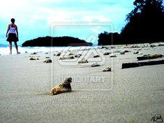 shells by ~rayzkodak