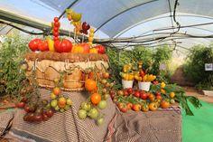 mesa decoración con tomates