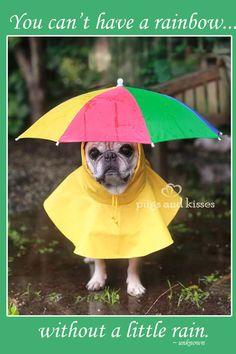 Rainbow loving pug... So cute!!!