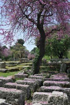 Ancient Ruins of Olympia - Picture of Katakolon Taxi - Ancient Olympia Day Tours, Pyrgos - Tripadvisor Greece Cruise, Greece Holiday, Ancient Beauty, Ancient Ruins, Day Tours, Homeland, Taxi, Olympia, Trip Advisor