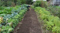 Ako striedať jednotlivé druhy zeleniny v záhrade, aby sme dosiahli väčšiu úrodu … Čítať ďalej