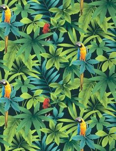Tropical - Rainforest - Birds - Parrots - Macaw - Wallpaper