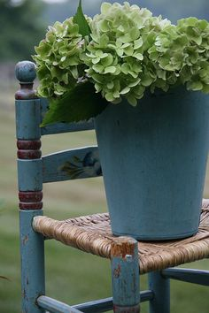 sap bucket w hydrangeas . Lovely