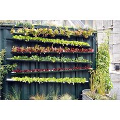 Re-purposes gutters make a great wall garden safe from hungry critters. Tilted for drainage.