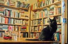 Love a bookstore with a cat!
