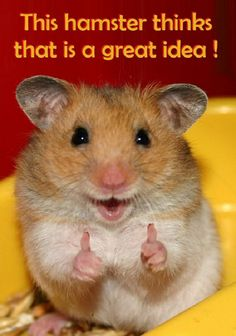 But hamsters don't always know what they're talking about :)