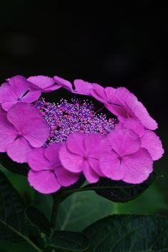 envoyer un bouquet de fleur pas cher 73 #fleurs #bouquet