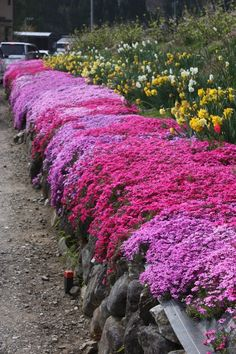 Rosa kriechende Flammenblume creeping phlox - All For Garden Flower Landscape, Landscape Design, Garden Design, Landscape Fabric, House Landscape, Landscape Architecture, Landscape Paintings, Phlox Flowers, Planting Flowers