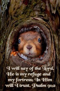 Psalm 91:2. I will say of the Lord. He is my refuge and my fortress: In Him will I trust.
