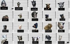 Is A Pig The Right Pet For You? Right For You Right Now?? - Mini Pig Info Pig Facts, Pot Belly Pigs, Mini Pigs, Pet Pigs, Little Pigs, Pet Store, Cute Photos, Baby Animals, Education