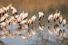 Luangwa's birdlife is a sight to behold. Experience Luangwa by water with a unique boating safari along the famous Luangwa River.