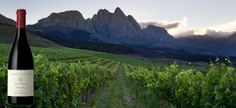 #NeilEllis Wines - South Africa