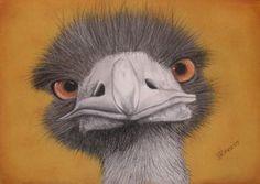 Original Art Pastel Painting: Curious Emu: Paintings Realism Pastel   Wildlife   Daniella Jones