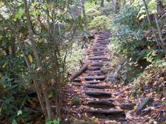 Trail beginning to Whiteside Mountain