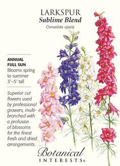 Sublime Blend Larkspur Seeds - .75 grams - Consolida