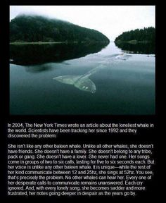The loneliest whale on the planet :-(
