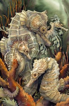 Image result for jody bergsma