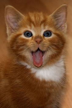 The 100 Most Important Kitten Photos Of All Time - Katzen Pretty Cats, Beautiful Cats, Animals Beautiful, Cute Baby Animals, Funny Animals, Animals Images, Sleepy Animals, Crazy Animals, Animals Dog