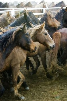 Save the wild horses.  by Ree Drummond