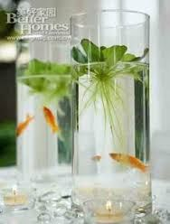 Image result for growing plants in water vases